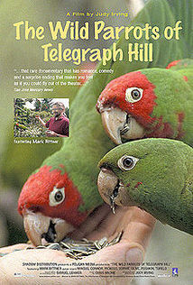 Subtitrare The Wild Parrots of Telegraph Hill (2003)