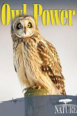 subtitrare PBS - Owl Power